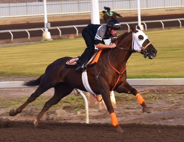 Racetrack Programs Represented In International Horse