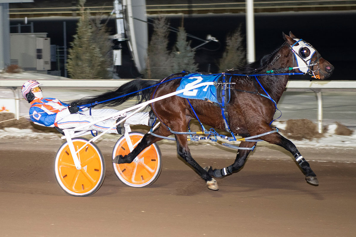 Probert, winner of the Don Byrne Memorial stake at Century Mile. Driver: Brandon Campbell